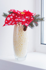 Composition from Poinsettia Plant with spruce branches in vase o