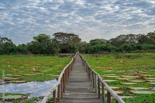 Brazilian Panantal skyline and wooden footbridge - 70790051