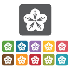 Flower icon. Attraction of japanese icon set. Rectangle colourfu