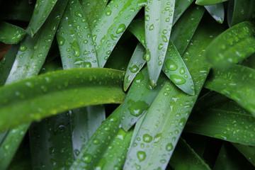 雨の中の葉No.2