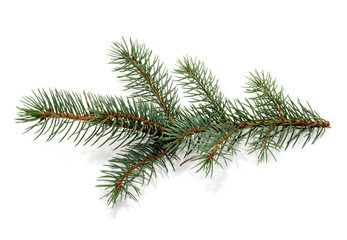 fur-tree branch.
