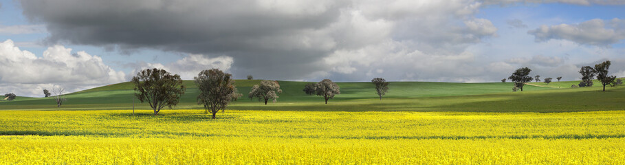 Fields of Green and Gold