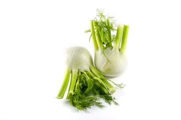 Fresh fennels on a white background