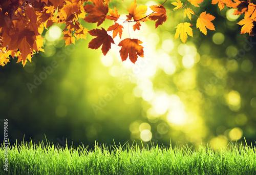 Aluminium Bossen leaves in autumn forest