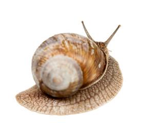 Snail rear view