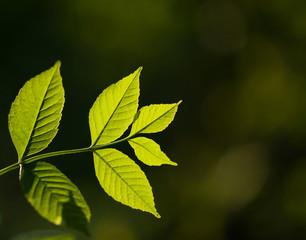 Morning sunlight on leaves in forest