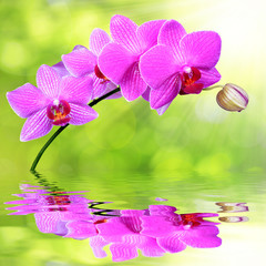 purple orchid reflected on rippled water surface