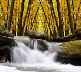 Autumnal forest with waterfall in Czech Republic