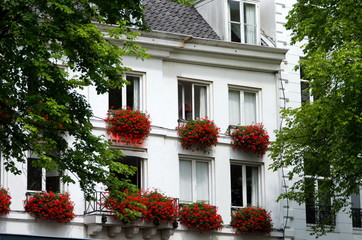 Ivy geraniums on windows of a hotel in Amsterdam