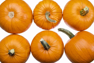 six pumpkins on white