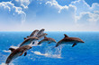 Jumping dolphins - 70804873