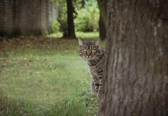 green-eyed cat peeking behind the tree