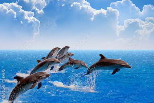 Papiers peints Dauphin Jumping dolphins