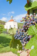 Dresden - Germany - Vine of saxony
