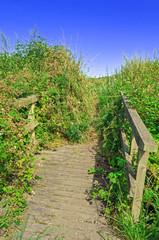 Wooden Foot Bridge,Nature Trail