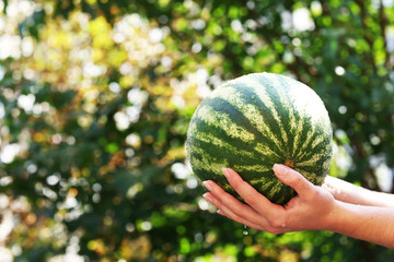 Washing watermelon, outdoors