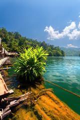 lake, bush, jungle, house