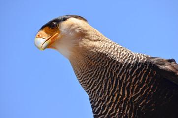 Exotischer Vogel Kopf und Blick