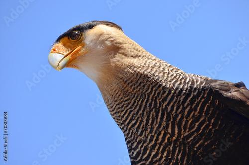 canvas print picture Exotischer Vogel Kopf und Blick