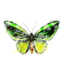 Watercolor Image Of Tropical Butterfly