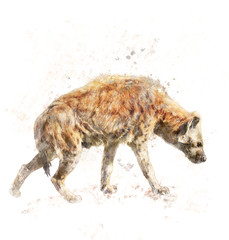 Watercolor Image Of Spotted Hyena