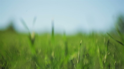 spring grass in sun light and defocused sky on background