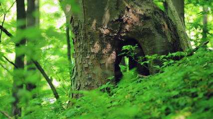 Hollow in a tree
