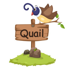animal alphabet letter Q for quail