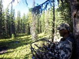 Tree Stand Blind