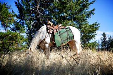 Horse with Saddle Bags