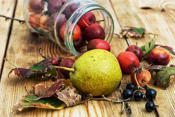 autumn harvest fallen fruit and berries