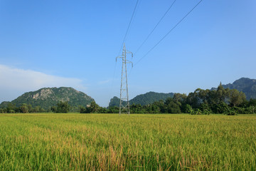 Electricity Post in rice field