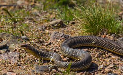 snake on a stone