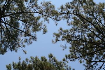 ciel bleu et arbre vert