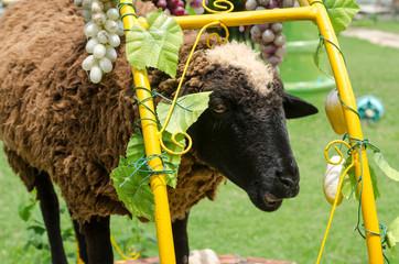 Close up of sheep face in garden