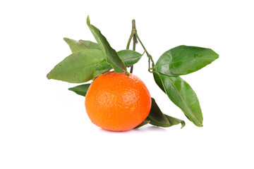 Ripe beautiful orange.