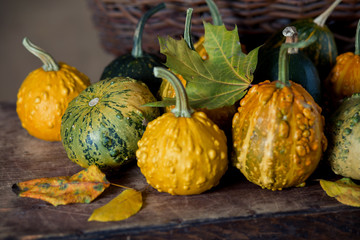 Colorful pumpkins on the table