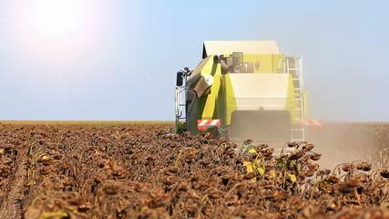 Machine harvesting
