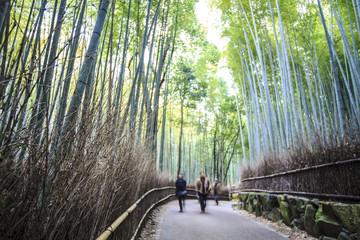 green bamboo grove in Arashiyama