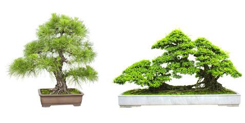 Set of bonsai