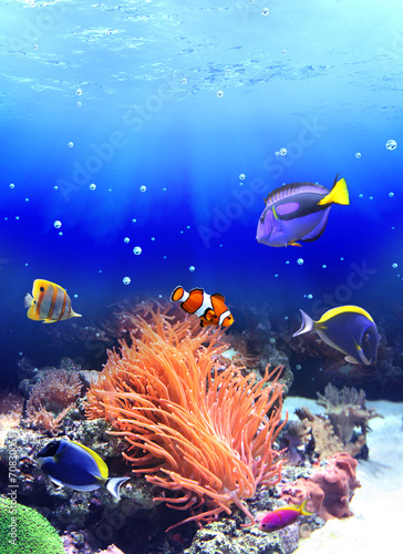 Underwater scene with tropical fish - 70830051