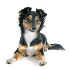 .Mixed-Breed dog