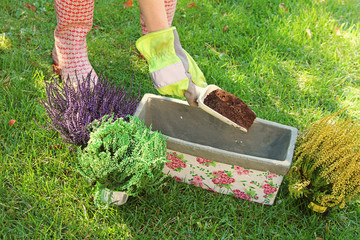 gardener preparing to plant flowers in pot with soil