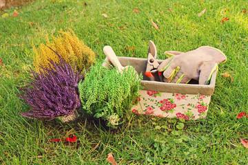 gardening - heather planting