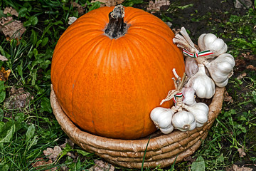 Pumpkins and garlic placed in a wicker basket