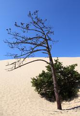 Am Fuß der Dune du Pilat