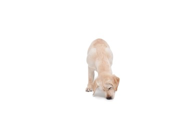 Cute dog standing alone and sniffing