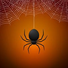 Spider and Cobwebs