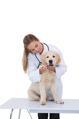 Vet giving a puppy a check up