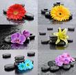 Kwiaty z kamieniami bazaltowymi do spa